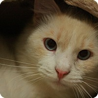 Adopt A Pet :: Kabuki - Canoga Park, CA