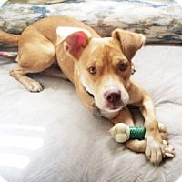 Adopt A Pet :: Quinn - Homewood, AL