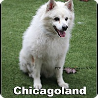 Adopt A Pet :: Mr. Harry Bumpers - Elmhurst, IL