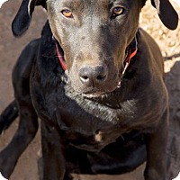 Adopt A Pet :: Lady - Ball Ground, GA