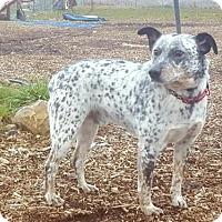 Adopt A Pet :: Tango - Yreka, CA
