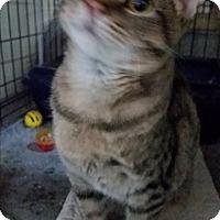 Adopt A Pet :: Nicholas - Jackson, MO