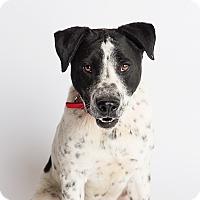Adopt A Pet :: Nat King