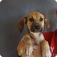 Adopt A Pet :: Zack - Oviedo, FL