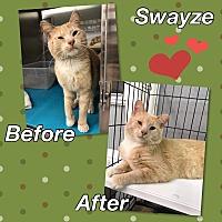 Adopt A Pet :: Swayze - Atco, NJ