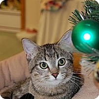 Domestic Shorthair Cat for adoption in Greenville, Illinois - Tatiana