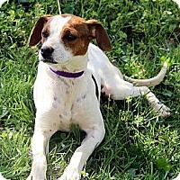 Adopt A Pet :: Nadia - Staunton, VA