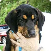 Adopt A Pet :: Nicky - Kingwood, TX