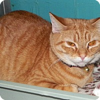 Adopt A Pet :: Rosalie - Dover, OH