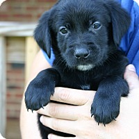 Adopt A Pet :: Jefferson - Knoxvillle, TN