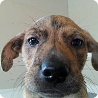 Adopt A Pet :: Bourbon - Evergreen, CO