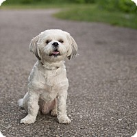 Adopt A Pet :: Lewis - Drumbo, ON