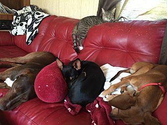 Feist Mix Dog for adoption in Goldsboro, North Carolina - Colt