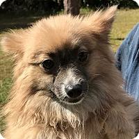 Adopt A Pet :: Molly - Orlando, FL