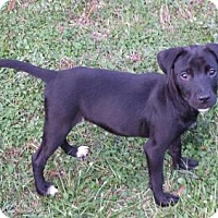 Adopt A Pet :: Daffodil - Livingston, TX