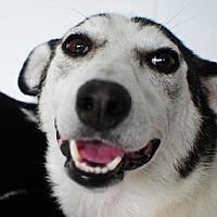 Adopt A Pet :: Rosie - Crandall, GA