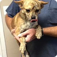 Adopt A Pet :: ZIPPY - Metairie, LA
