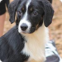 Adopt A Pet :: Frankie - E. Wenatchee, WA