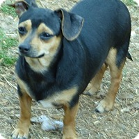 Adopt A Pet :: Horace - Anderson, SC