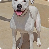 Terrier (Unknown Type, Medium)/Labrador Retriever Mix Dog for adoption in Fenton, Missouri - Zeevah