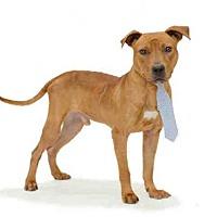 Adopt A Pet :: *ECHO - Orlando, FL
