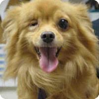 Adopt A Pet :: ILLIAD - Springfield, MA