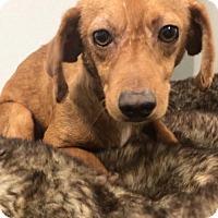 Adopt A Pet :: Kokomo - Weston, FL