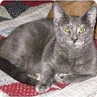 Adopt A Pet :: Mia (3) - Schertz, TX