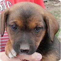 Adopt A Pet :: Talullah - Harrison, AR