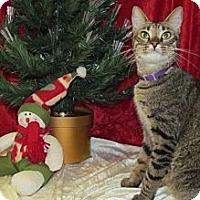 Adopt A Pet :: Dora - Orlando, FL
