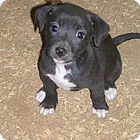 Adopt A Pet :: Maple - Glastonbury, CT