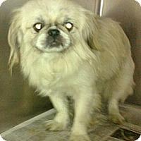 Adopt A Pet :: Princess (Huntington, WV) - Vansant, VA
