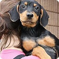 Adopt A Pet :: Sport - Cumming, GA