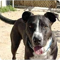 Adopt A Pet :: Shakespeare - YERINGTON, NV