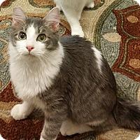 Adopt A Pet :: Blake - Palmdale, CA