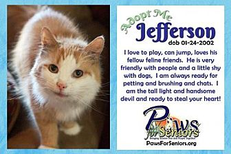Domestic Longhair Cat for adoption in Bealeton, Virginia - Jefferson