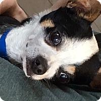 Adopt A Pet :: Parker - West Los Angeles, CA
