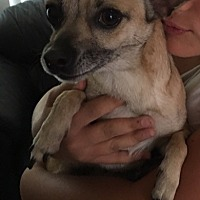 Adopt A Pet :: ZZ-Precious *courtesy post - Rancho Santa Margarita, CA