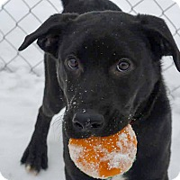Adopt A Pet :: Spin - Meridian, ID