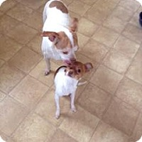 Adopt A Pet :: Tucker ~ *Courtesy Post* - Antioch, IL