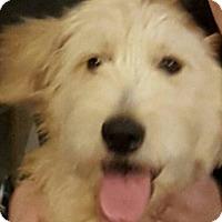 Adopt A Pet :: Angie - Alpharetta, GA