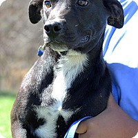 Adopt A Pet :: Jet - Waldorf, MD