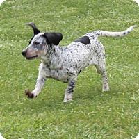 Adopt A Pet :: Earth - Harmony, Glocester, RI