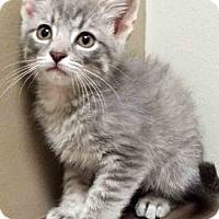 Adopt A Pet :: ADOPTED!!!   Church - Oswego, IL