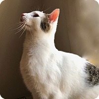 Adopt A Pet :: Quinn - Lambertville, NJ