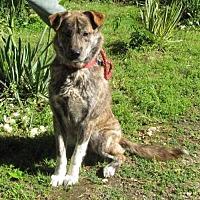 Adopt A Pet :: Carter - Providence, RI