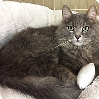 Adopt A Pet :: Neuman - Colorado Springs, CO