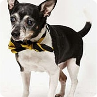 Adopt A Pet :: Don Ameche - New York, NY