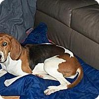 Adopt A Pet :: Hope - Georgetown, KY