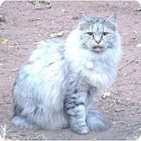 Adopt A Pet :: Ridge - Scottsdale, AZ